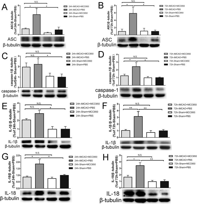 NLRP3 inflammasome activates interleukin-23/interleukin-17 axis