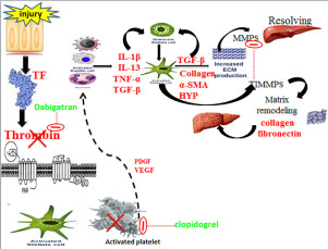 Interruption of platelets and thrombin function as a new