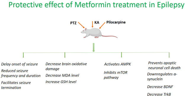 Envisioning the neuroprotective effect of Metformin in