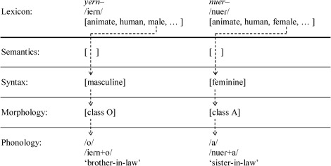 The coding of sex in Spanish nouns - ScienceDirect