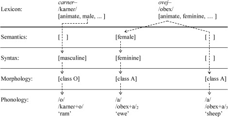 Feminine gender of ram