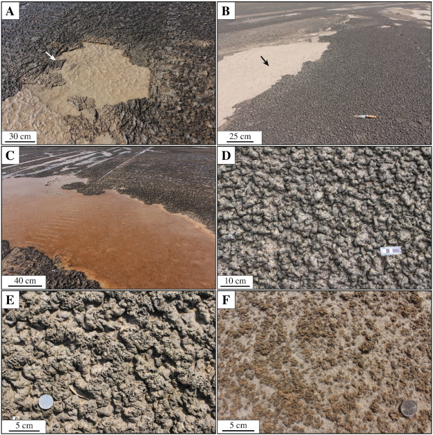 The preservation potential of environmentally diagnostic sedimentary