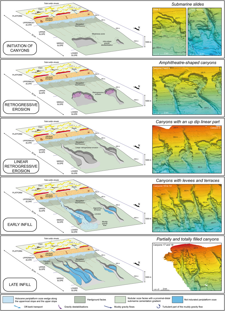 Submarine canyon morphologies and evolution in modern carbonate ...