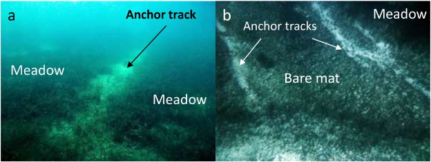From mechanical to chemical impact of anchoring in seagrasses: The ...