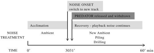 Anthropogenic noise compromises the anti-predator behaviour