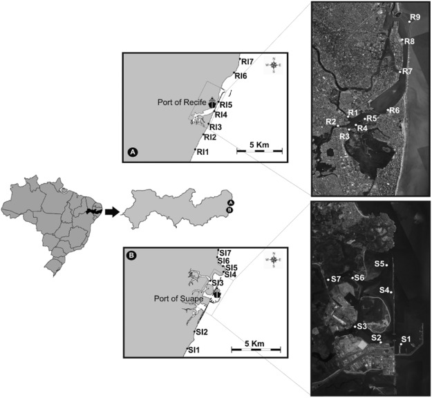 2c72b2a436ad Assessment of organotins and imposex in two estuaries of the ...