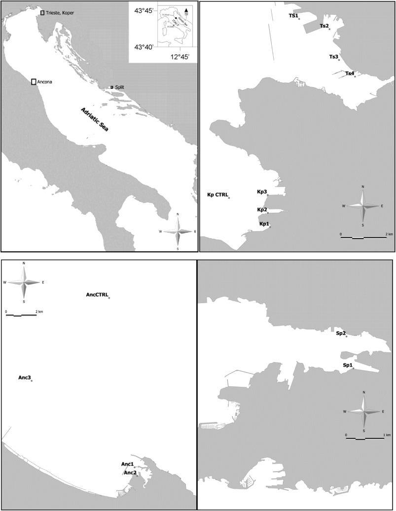 Meiofaunal communities in four Adriatic ports: Baseline data