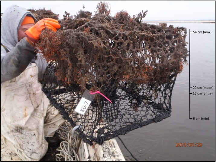 Identification, recovery, and impact of ghost fishing gear