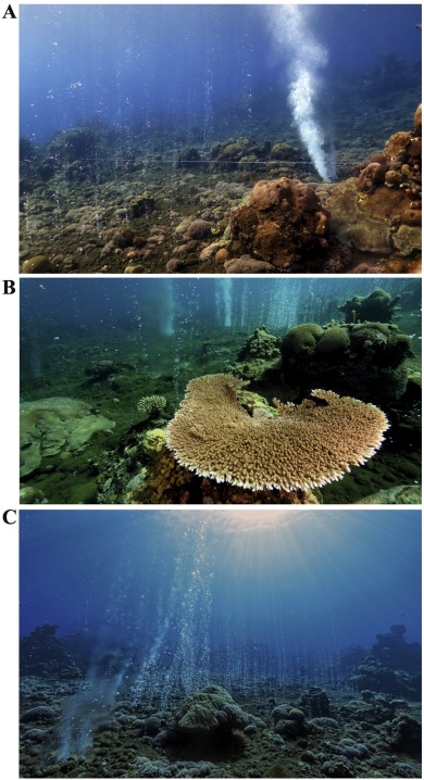 Suitability of the shallow water hydrothermal system at Ambitle
