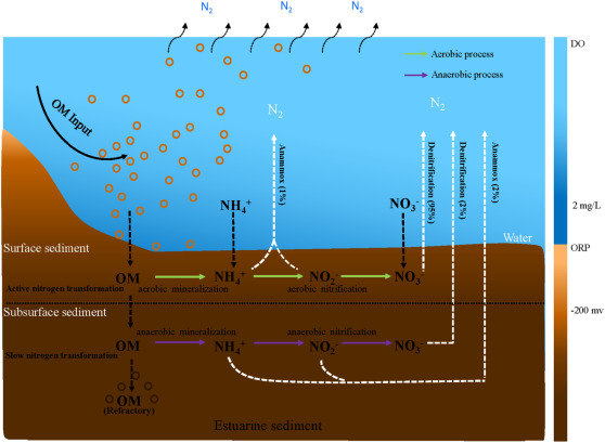 Nitrogen Removal In The Sediments Of The Pearl River Estuary