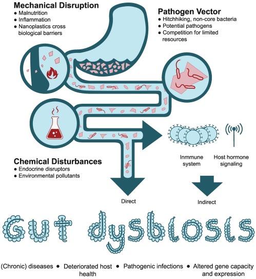 Dysbiosis o que e