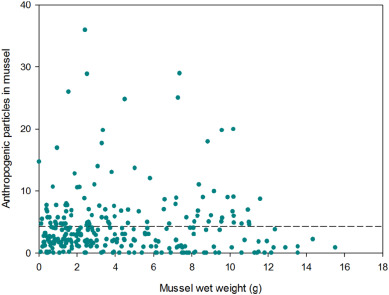 Particle characteristics of microplastics contaminating the mussel
