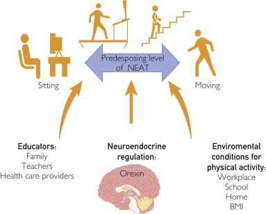 Nonexercise Activity Thermogenesis in Obesity Management ...