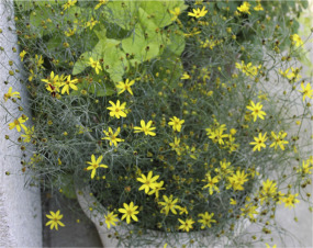Mayo Clinic's Flower of Hope™ - ScienceDirect