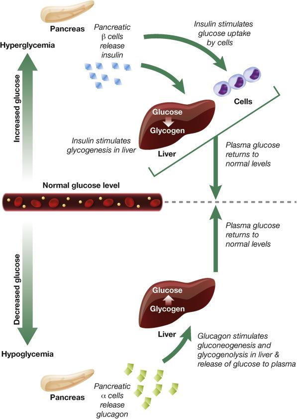 glucogenosis diabetes tipo 11