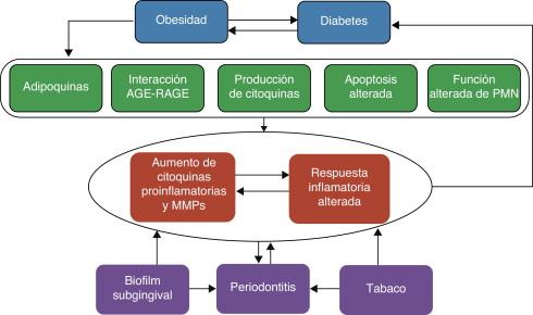 proteína de unión a lipopolisacáridos obesidad y diabetes