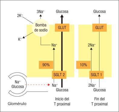 prueba de diabetes antagonista del receptor il 1