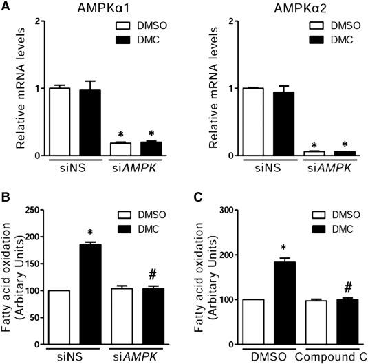 DMC (2′,4′-dihydroxy-6′-methoxy-3′,5′-dimethylchalcone) improves