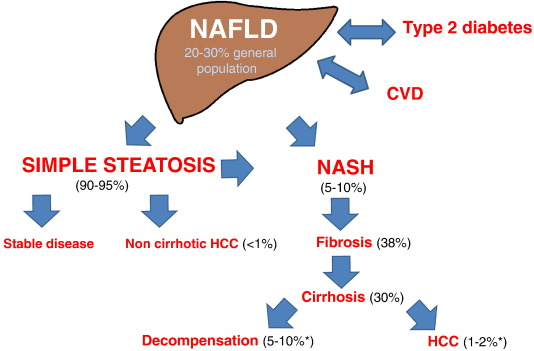 The multiple hit pathogenesis of non alcoholic fatty liver disease download high res image 325kb ccuart Choice Image