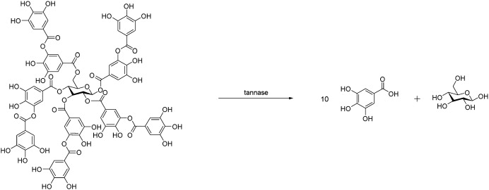 A novel and efficient immobilised tannase coated by the layer-by ...