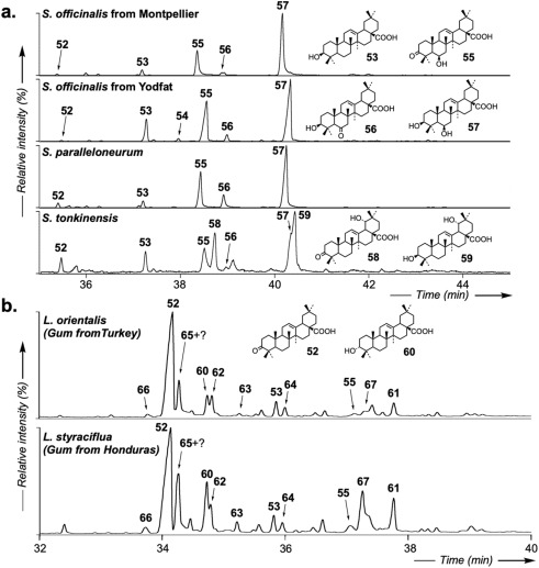 The potential of triterpenoids as chemotaxonomic tools to