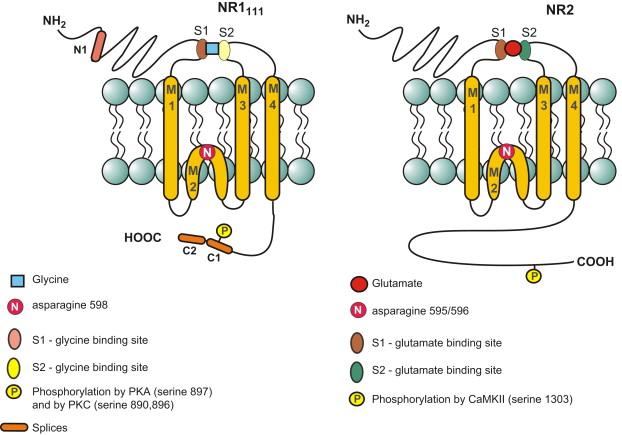 clomid pct cycle dosage
