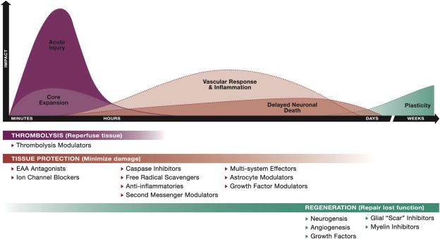 The development of stroke therapeutics: Promising mechanisms