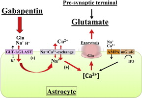 Gabapentin increases extracellular glutamatergic level in the locus