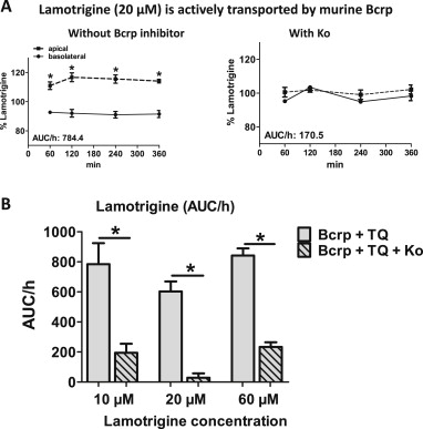 The Antiepileptic Drug Lamotrigine Is A Substrate Of Mouse And Human