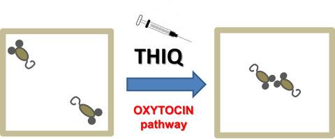 Oxytocin Found To Stimulate Social >> Melanocortin 4 Receptor Stimulation Improves Social Deficits