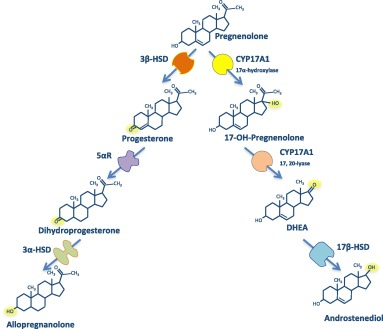 Repurposing Steroidogenesis Inhibitors For The Therapy Of