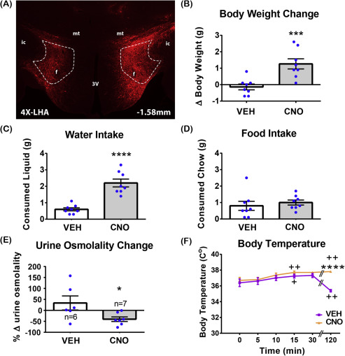 Activation of lateral hypothalamic area neurotensin-expressing