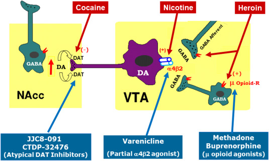 Progress in agonist therapy for substance use disorders