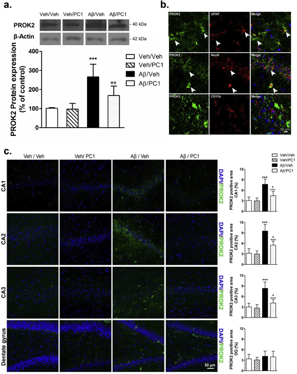 The prokineticin receptor antagonist PC1 rescues memory