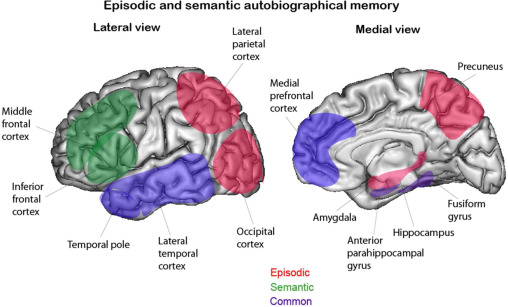 Semantic memory brain diagram wiring diagram database the mnesis model memory systems and processes identity and future rh sciencedirect com brain diagram hypothalamus ccuart Gallery