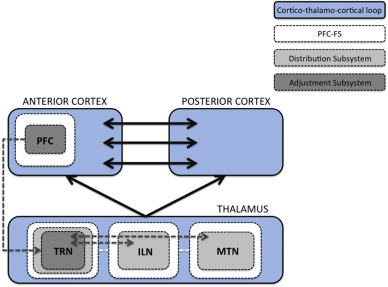 Prefrontal neural dynamics in consciousness - ScienceDirect