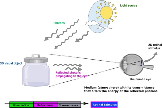 Pressure stimulation of retinal ganglion cells with