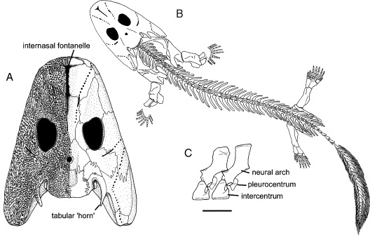 The Emergence Of Early Tetrapods Sciencedirect