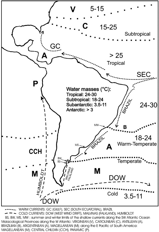 Morphological Variability Of Brachidontes Swainson Bivalvia