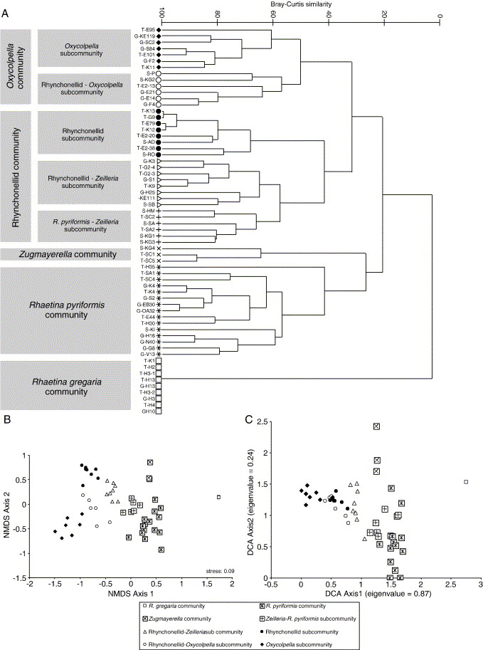 Evaluating compositional turnover of brachiopod communities during