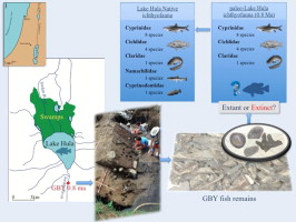 Fish and ancient lakes in the Dead Sea Rift: The use of fish