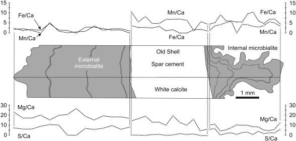 Late Jurassic biogeochemical microenvironments associated