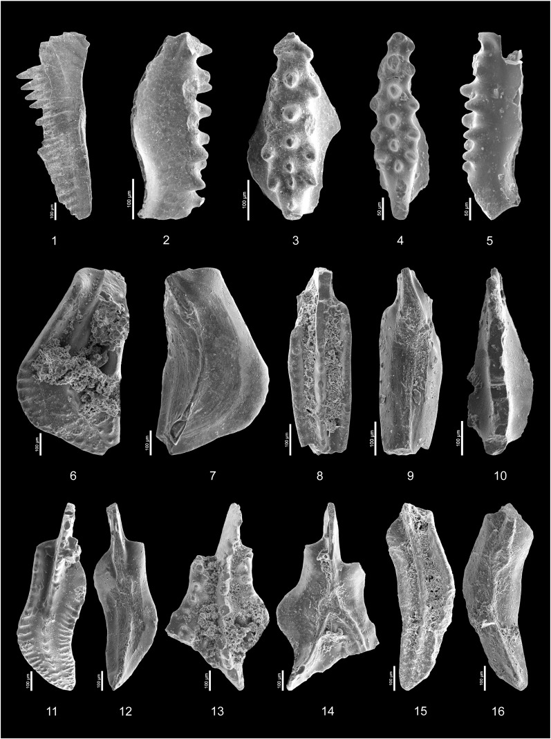 Conodont and carbon isotope stratigraphy near the Frasnian ...