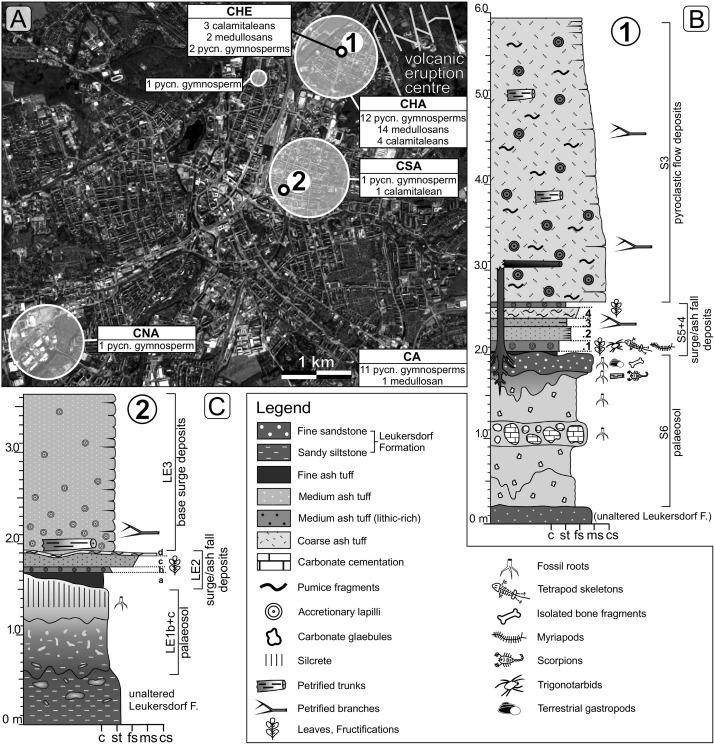 Tree-ring analysis elucidating palaeo-environmental effects captured ...