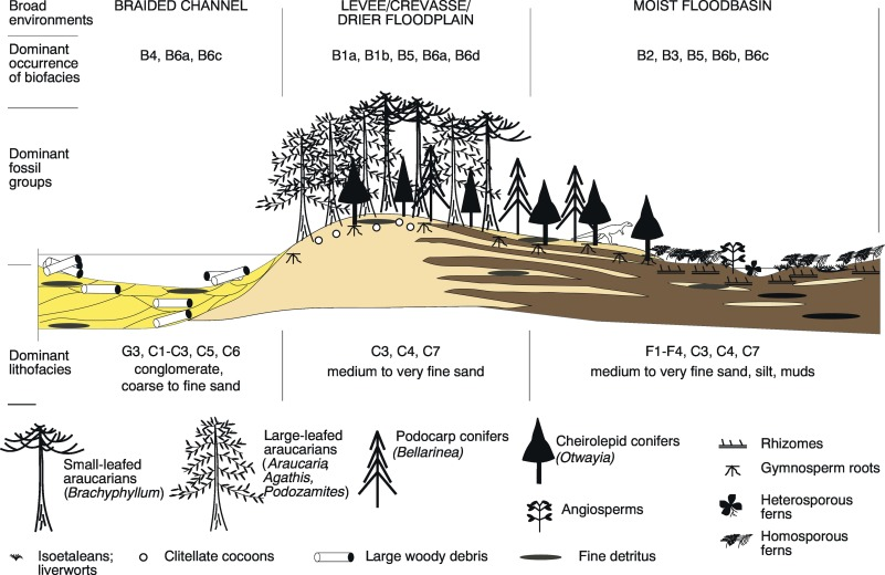 Palaeoenvironments and palaeocommunities from Lower