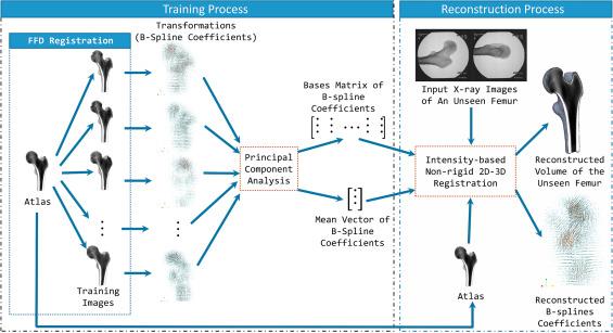 Non-rigid free-form 2D–3D registration using a B-spline