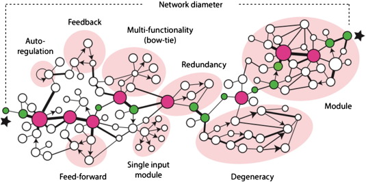 Complexity And Network Dynamics In Physiological Adaptation An