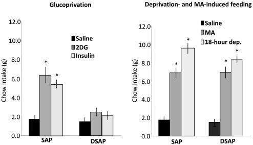 Hindbrain glucoregulatory mechanisms: Critical role of catecholamine