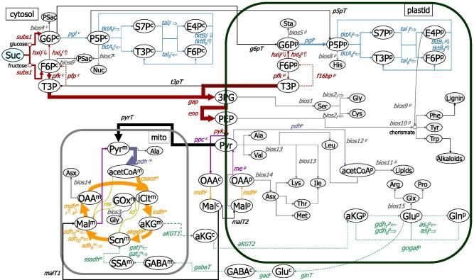 plant metabolic networks schwender jrg shanks jacqueline v