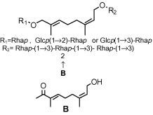Monoterpene glycosides isolated from Fadogia agrestis